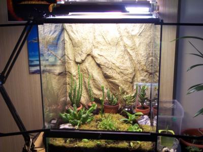 construire son terrarium mes plantes carnivores. Black Bedroom Furniture Sets. Home Design Ideas