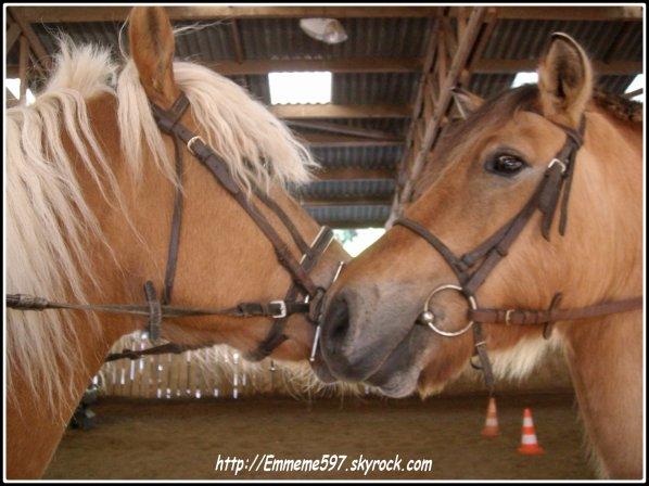 Les chevaux ma passion ...