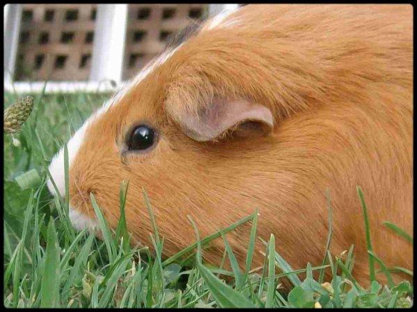 L'herbe ... l'herbe que de l'herbe !