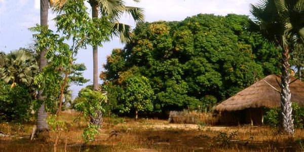 Casamance au sénégal