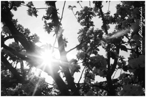 """"""" Quand le Soleil etait descendu à l' Horizon, ses rayons, Brisés par les troncs des Arbres, divergeaient dans les Ombres de la Foret en longues Gerbes Lumineuses.. """""""