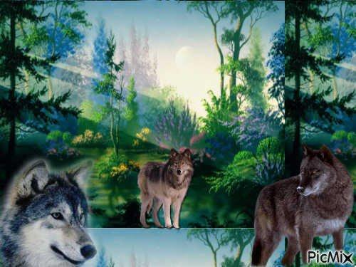 superbe montage des loup fait pâr moi