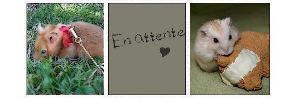 ₪ Mes Hamsters ₪