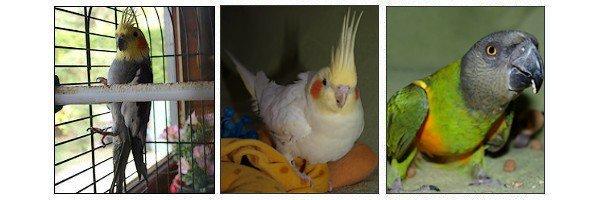 ₪ Mes Oiseaux ₪