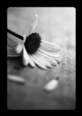 une fleur solitaire ...