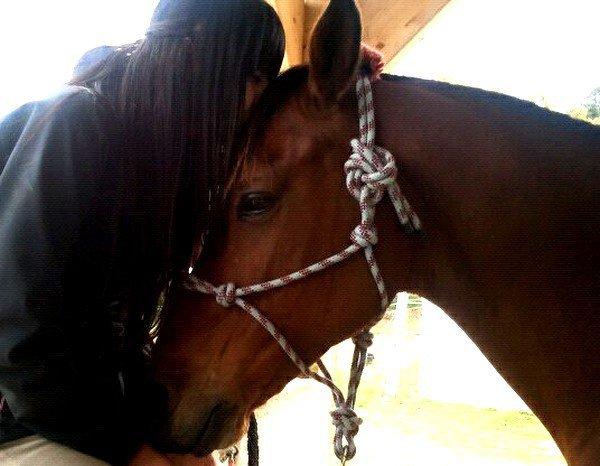 « Regardez un cavalier sans son cheval, il lui manque la moitié de son sang. »