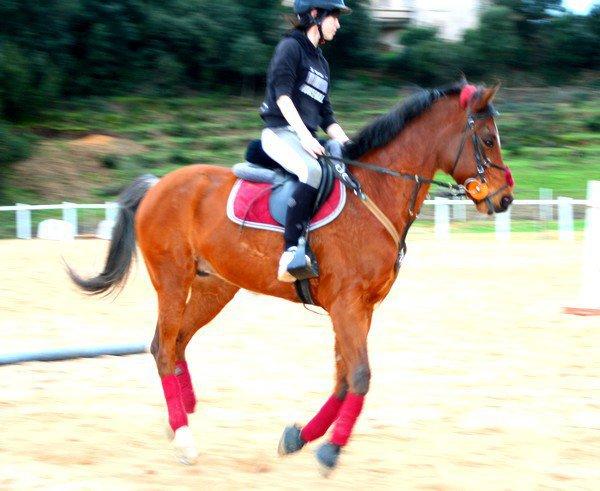 « Tu dois te fondre dans ton cheval, ne faire qu'un jusqu' à sentir en toi le sol au bout de ses pieds. Alors, tu deviens cavalier. »