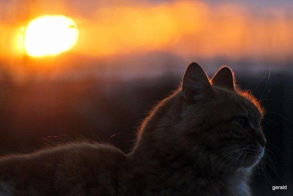 Un petit clin d'½il  profitant des derniers rayons de soleil.