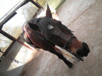 Toute une après midi sur le dos du poney. Un pur bonheur ♥