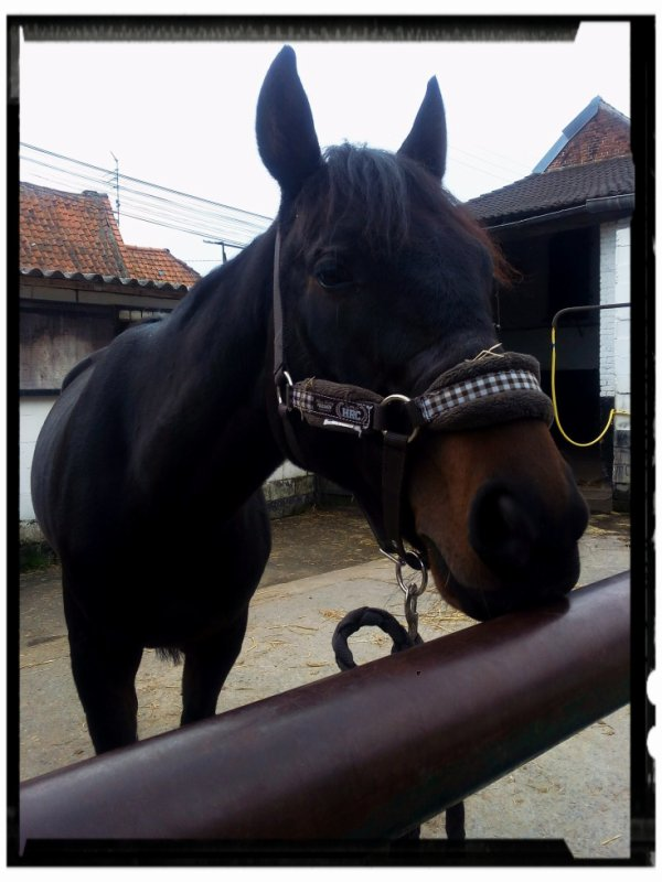 Dessin et cheval