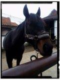Photo de HorsePictures