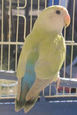 EXOTIC BIRD 971
