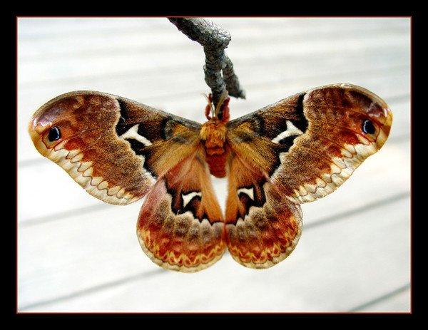 Idées déco/texte explicatif Cache pot Papillon Panneau en MDF papillon