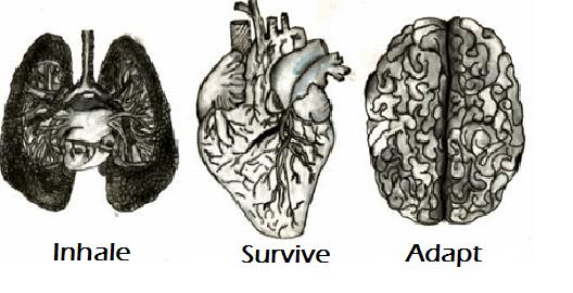 Inhale, Survive, Adapt
