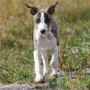 Photo de Animalement-Canin