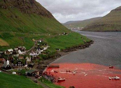 Massacre de Dauphin au Danemark