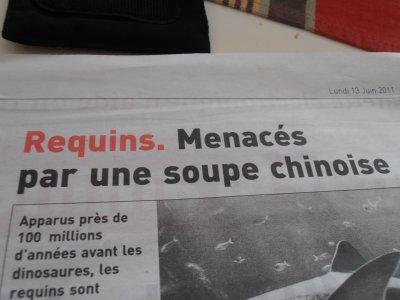 """"""" Requins. Menacés par une soupe chinoise """" Tel est le nom d'un article de journal parus le 13 Juin 2011"""