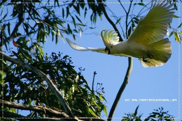 Le Cacatoès à huppe jaune