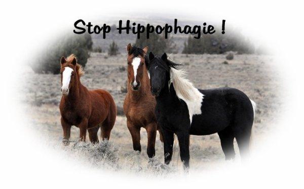 L'hippophagie