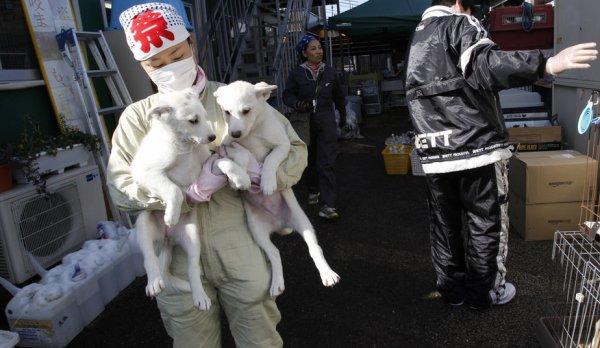 Animaux oubliés de Fukushima