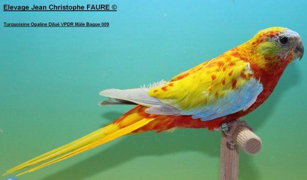 TURQUOISINES 2014: Derniers oiseaux à céder