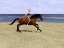 Photo de histoire-sims-chevaux