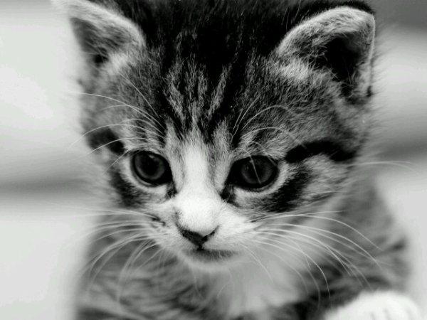 Blog de missparfaitelol top swag - Photo chaton trop mignon ...