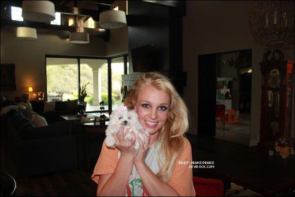 . Britney faisait quelques courses chez Albertsons à Los Angeles, le 02 février. .