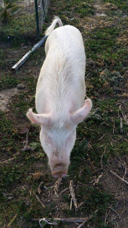 meme le petit cochon et trop gentil avec moi