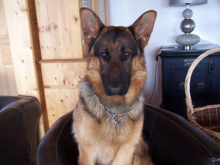 mon chien qui a 1 ans
