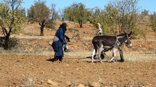 travaille de la terre au maroc