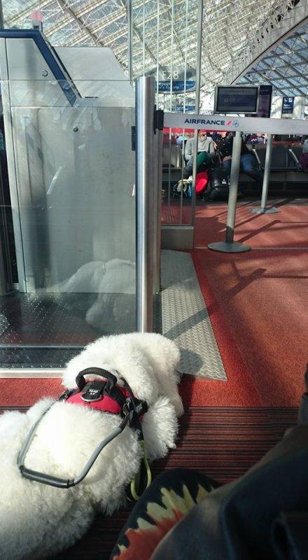 formation chien aide  pour la maladie alzheimer  continu