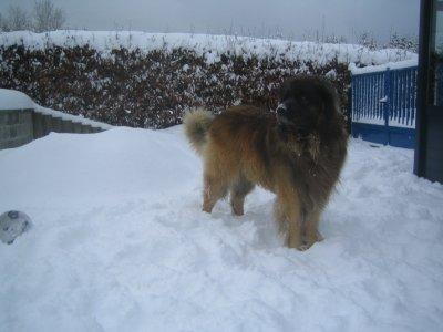 eclair dans la neige