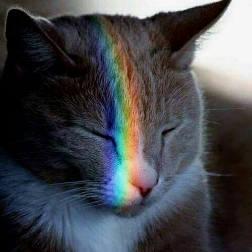 le chat arc-en-ciel xD