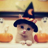 les fetes aussi halloween