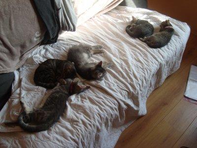 Mes petits chats <3