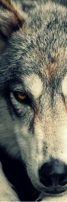 « N'allons pas dans les bois tant que le loup n'y est pas. Soyons jeunes et surtout, faisons face au loup... »