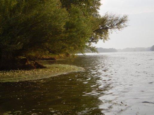 Les iles de la Loire 2010