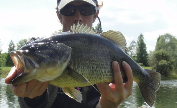 Sortie Black Bass
