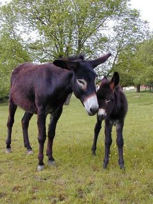 036 - Bon âne naît
