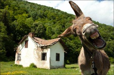 045 - fonctionnaire rural