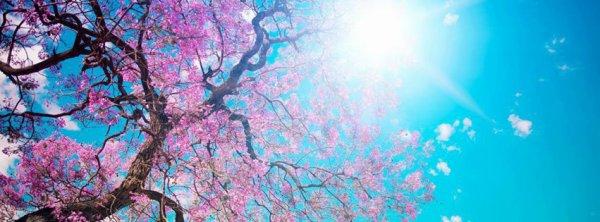 """""""Parfois la vie nous met au tapis , c'est alors a nous de décider si on veux se relever ou non"""""""