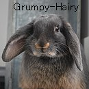 Photo de Grumpy-Hairy