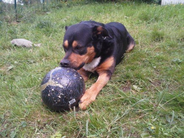 pas neuf longtemps le ballon, il va finir comme l'autre :)