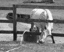 Photo de chevaux-mery-51