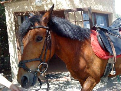 Un poney ...