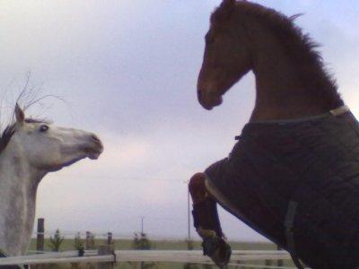Ouragan au paddock - 21 janv 2011