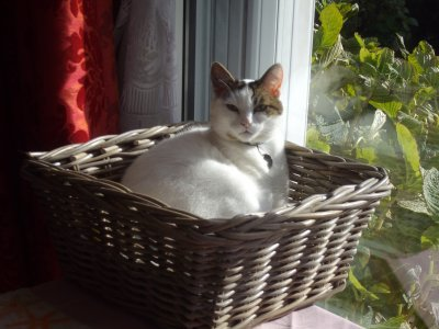 """§§§ Mon amour des chats ... Je vous présente """"ma GAVOTTE"""" ...§§§"""