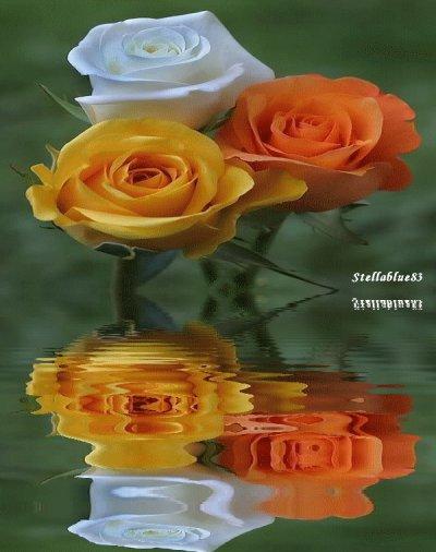 §§§ Merci SYLVIE .... §§§