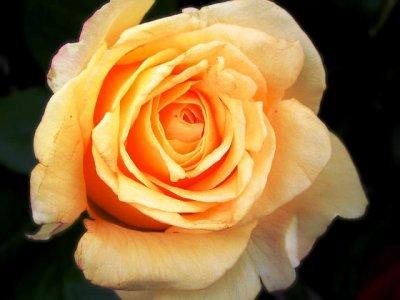 !!! Merci à tous mes amis de votre soutien _ Beaucoup de mal à remonter la pente _ Vous espère tous en bonne santé _ Gros bisous et merci de votre fidèlité _